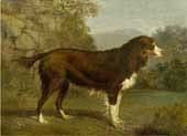 dog in a landscape