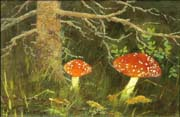 toadstools under the tree