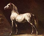 Arab Horse Grey White