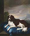 English Springer Spaniel on a Cushion