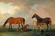 Mares and Foals-Facing Left