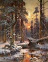 sunset in a spruce forest
