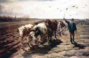 ploughing ox