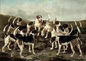The Hounds from York and Ainsty Kennels