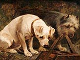 Two Dogs in a Barn