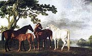 Mares and Foals in River Landscape