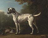 A Grey Spotted Hound